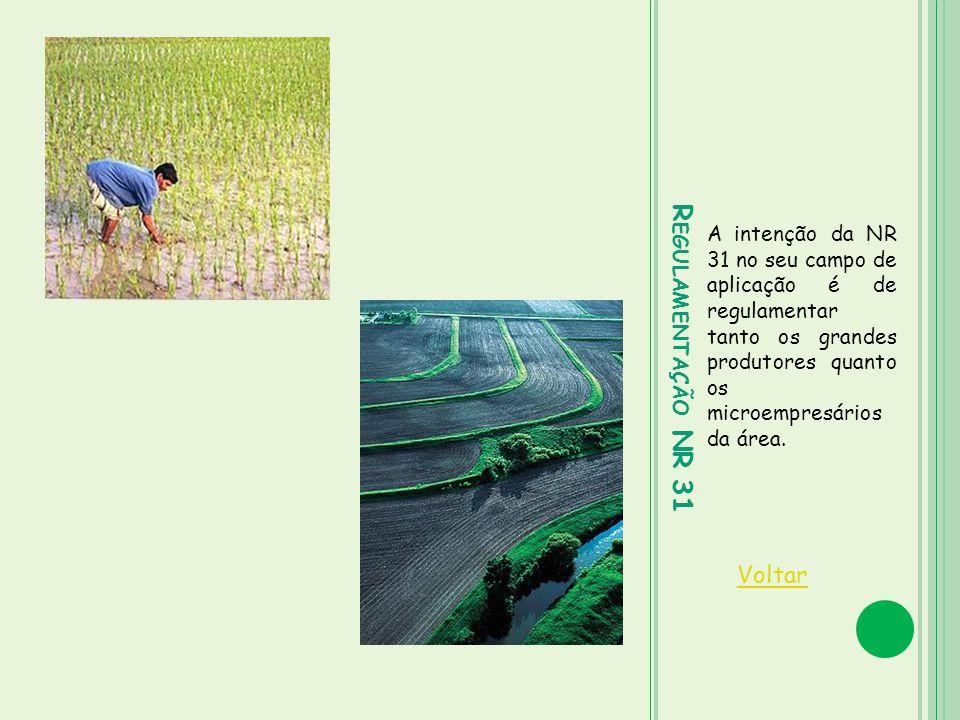 R EGULAMENTAÇÃO NR 31 A intenção da NR 31 no seu campo de aplicação é de regulamentar tanto os grandes produtores quanto os microempresários da área.