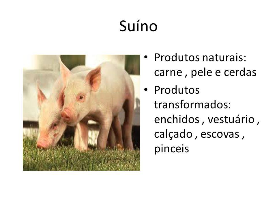 Suíno Produtos naturais: carne, pele e cerdas Produtos transformados: enchidos, vestuário, calçado, escovas, pinceis