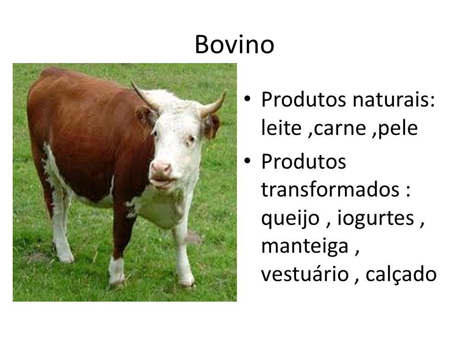 Bovino Produtos naturais: leite,carne,pele Produtos transformados : queijo, iogurtes, manteiga, vestuário, calçado