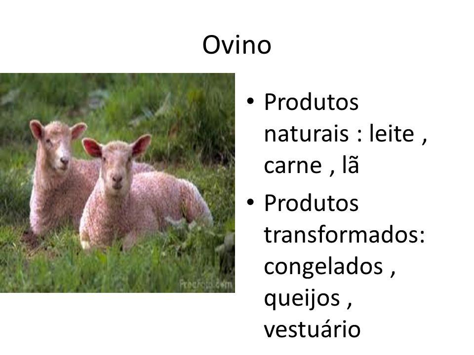 Ovino Produtos naturais : leite, carne, lã Produtos transformados: congelados, queijos, vestuário
