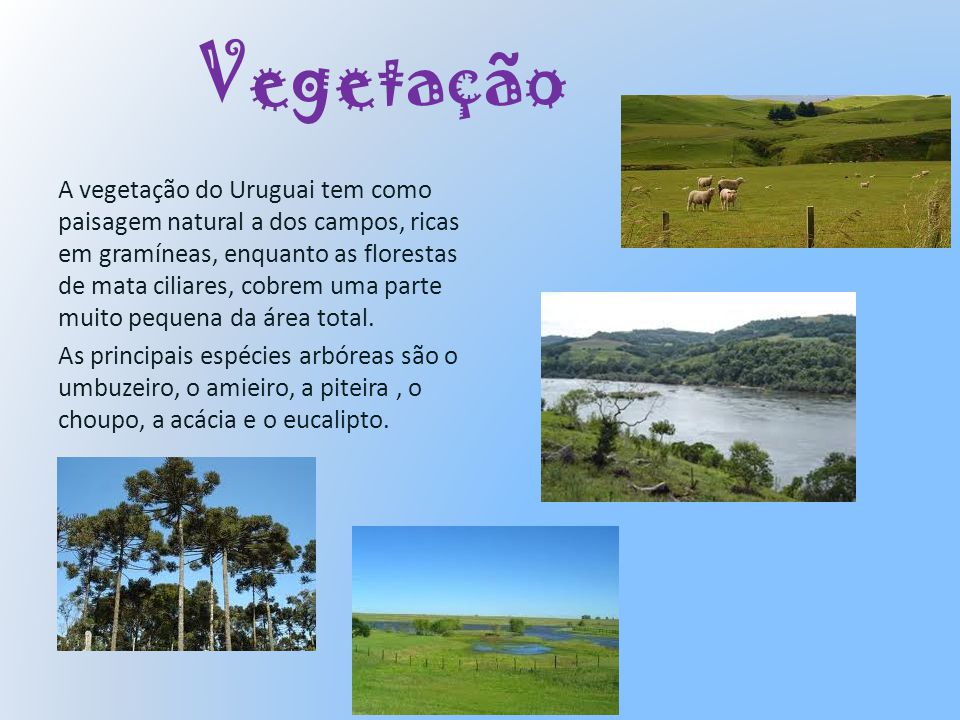 Vegetação A vegetação do Uruguai tem como paisagem natural a dos campos, ricas em gramíneas, enquanto as florestas de mata ciliares, cobrem uma parte