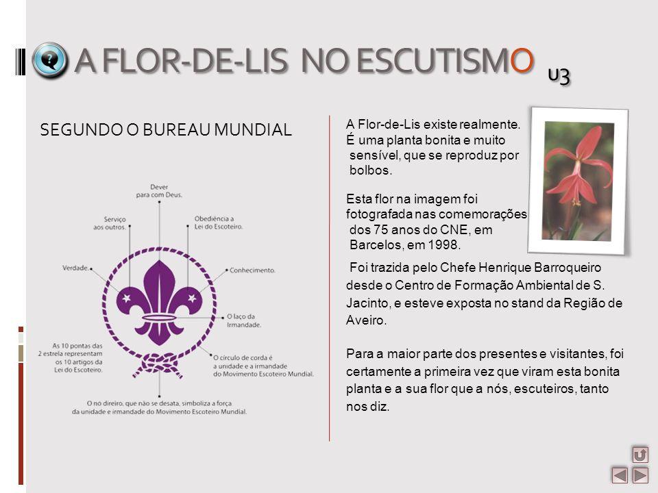 A FLOR-DE-LIS NO ESCUTISMO u3 A Flor-de-Lis existe realmente. É uma planta bonita e muito sensível, que se reproduz por bolbos. Esta flor na imagem fo