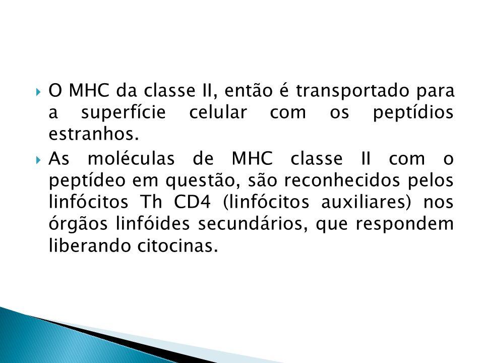 O MHC da classe II, então é transportado para a superfície celular com os peptídios estranhos. As moléculas de MHC classe II com o peptídeo em questão