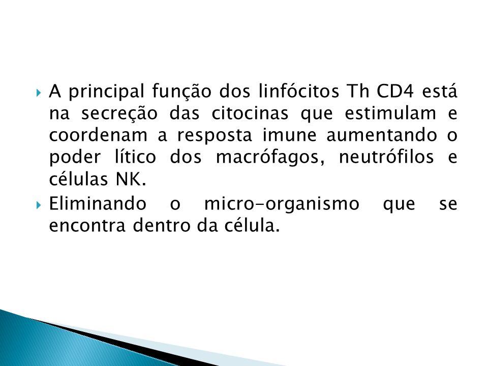 A principal função dos linfócitos Th CD4 está na secreção das citocinas que estimulam e coordenam a resposta imune aumentando o poder lítico dos macró