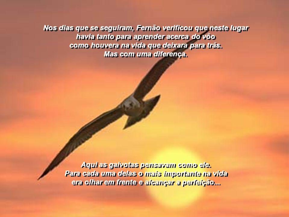 ...As duas gaivotas que surgiram junto às suas asas eram puras como a luz das estrelas...