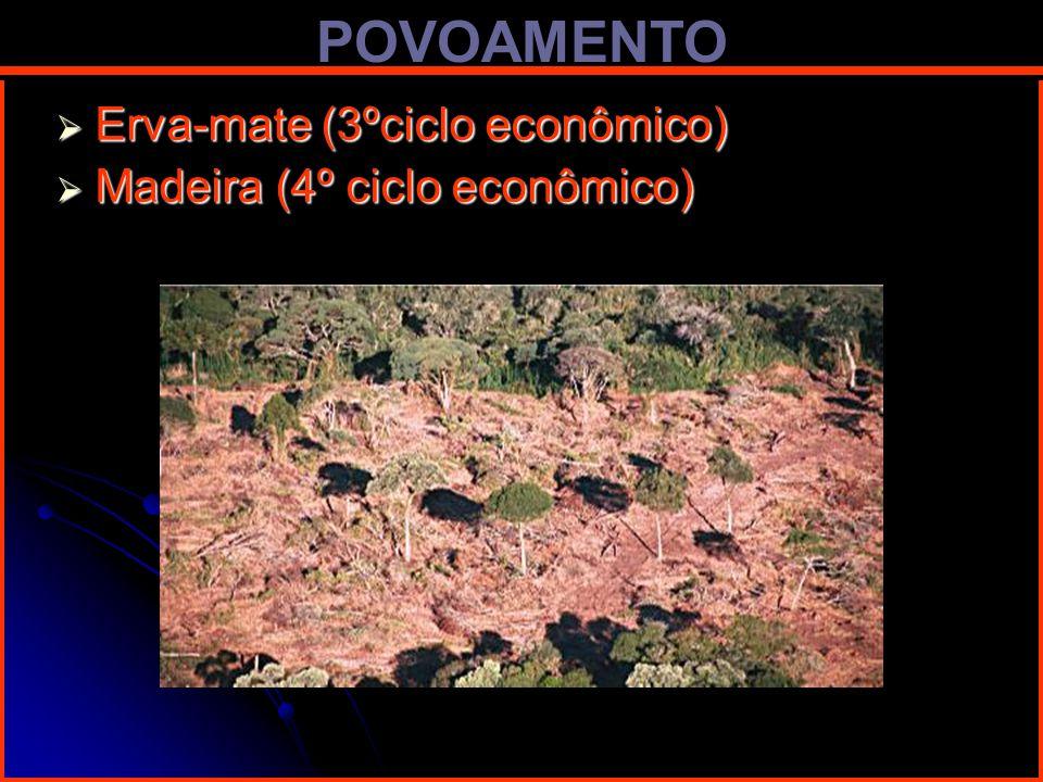 POVOAMENTO Erva-mate (3ºciclo econômico) Erva-mate (3ºciclo econômico) Madeira (4º ciclo econômico) Madeira (4º ciclo econômico)