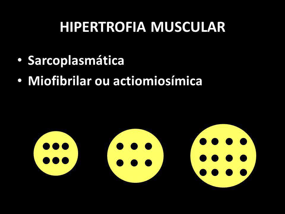 HIPERTROFIA MUSCULAR Sarcoplasmática Miofibrilar ou actiomiosímica SarcoplasmáticaMiofibrilar
