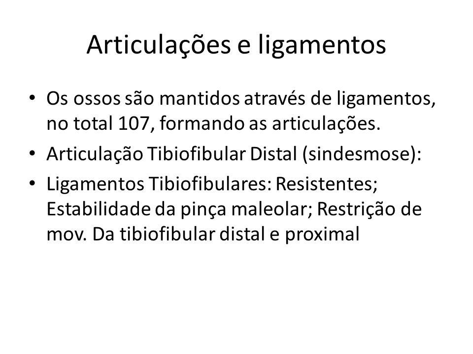 Ligamentos Ligamento colateral lateral Controla o estresse em varo Mais fraco do q.