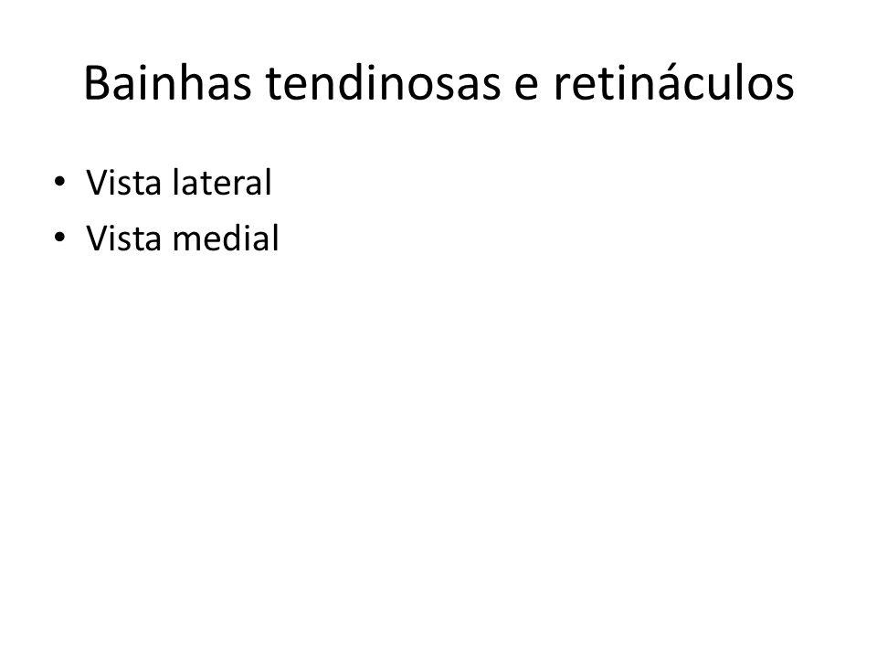 Dermátomos L4, L5, S1