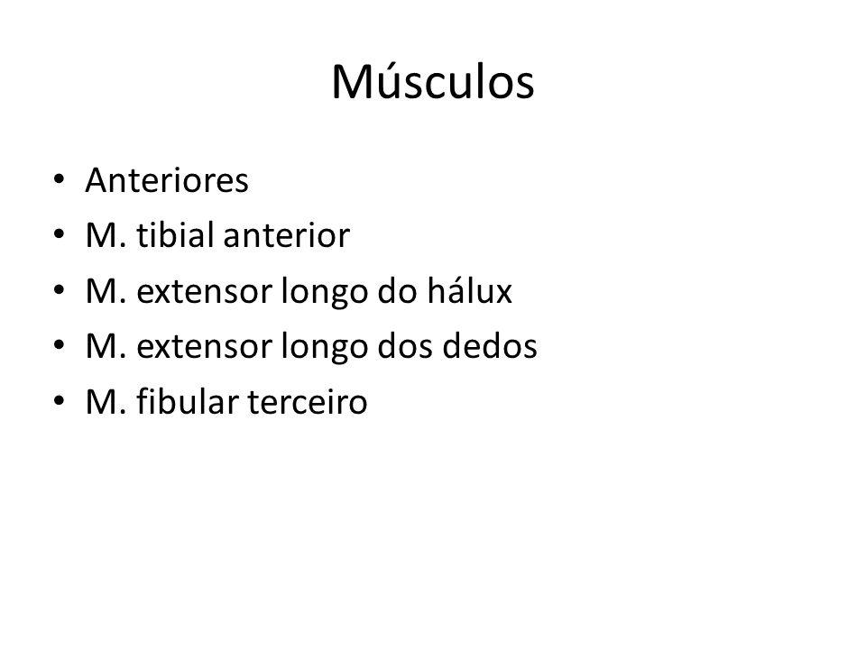 Músculos Laterais: M.fibular longo M. fibular curto Posteriores Superficiais: M.