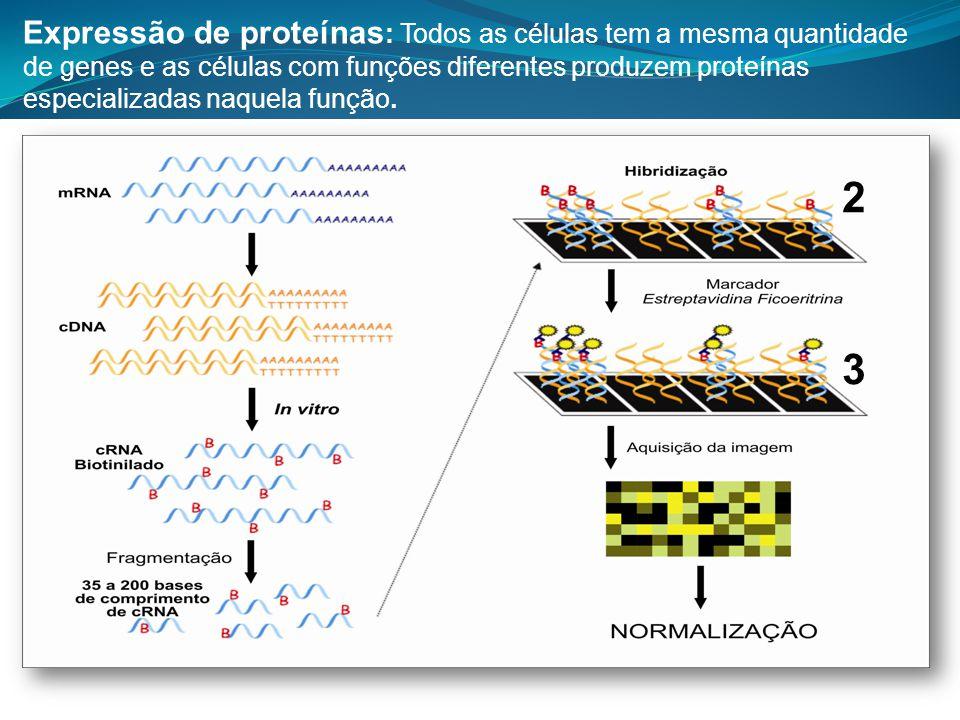 Expressão de proteínas : Todos as células tem a mesma quantidade de genes e as células com funções diferentes produzem proteínas especializadas naquel