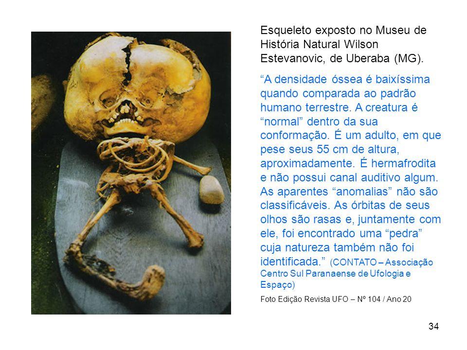34 Esqueleto exposto no Museu de História Natural Wilson Estevanovic, de Uberaba (MG). A densidade óssea é baixíssima quando comparada ao padrão human