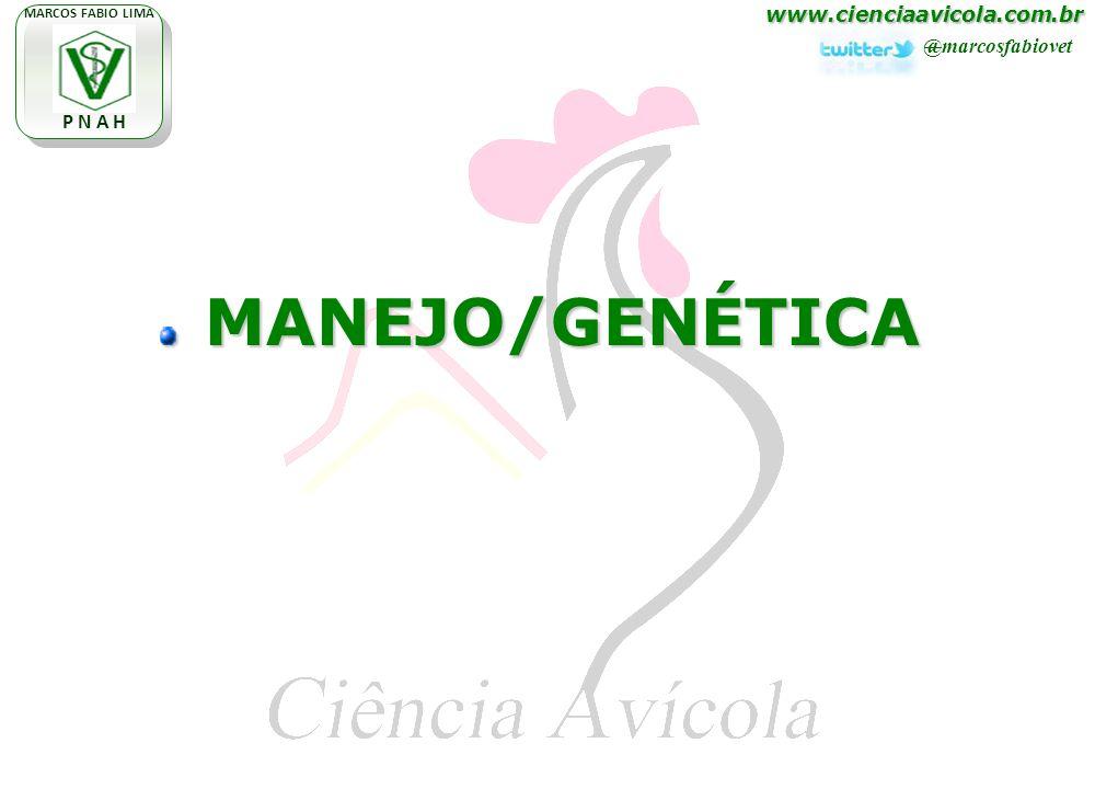 www.cienciaavicola.com.br @marcosfabiovet MARCOS FABIO LIMA P N A H MANEJO/GENÉTICA MANEJO/GENÉTICA
