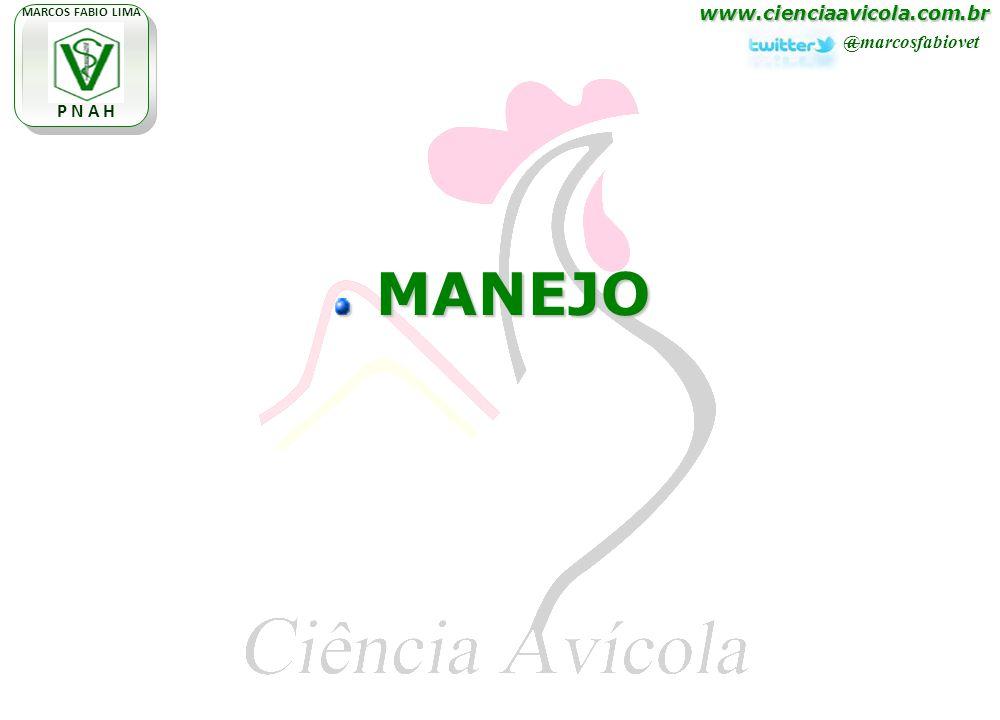 www.cienciaavicola.com.br @marcosfabiovet MARCOS FABIO LIMA P N A H MANEJO MANEJO