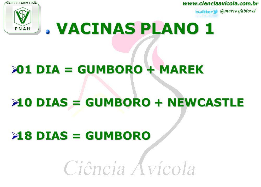 www.cienciaavicola.com.br @marcosfabiovet MARCOS FABIO LIMA P N A H VACINAS PLANO 1 VACINAS PLANO 1 01 DIA = GUMBORO + MAREK 01 DIA = GUMBORO + MAREK 10 DIAS = GUMBORO + NEWCASTLE 10 DIAS = GUMBORO + NEWCASTLE 18 DIAS = GUMBORO 18 DIAS = GUMBORO