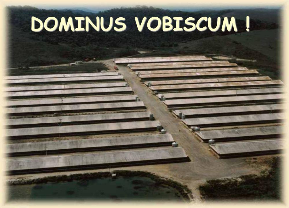 www.cienciaavicola.com.br @marcosfabiovet MARCOS FABIO LIMA P N A H DOMINUS VOBISCUM !