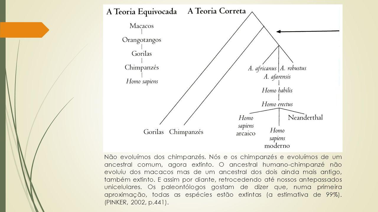 Não evoluímos dos chimpanzés. Nós e os chimpanzés e evoluímos de um ancestral comum, agora extinto. O ancestral humano-chimpanzé não evoluiu dos macac