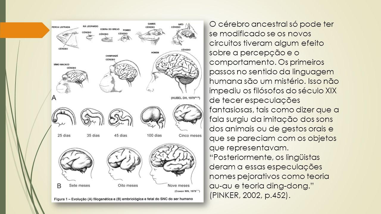 O cérebro ancestral só pode ter se modificado se os novos circuitos tiveram algum efeito sobre a percepção e o comportamento. Os primeiros passos no s