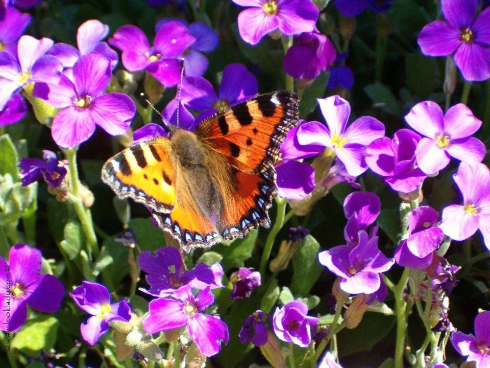 seu Seja flexível como as flores, como as borboletas...