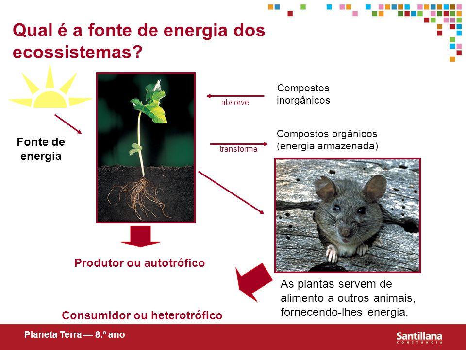 Qual é a fonte de energia dos ecossistemas.