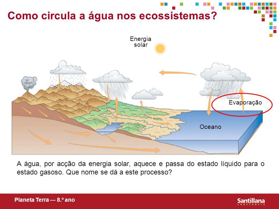 Como circula a água nos ecossistemas.