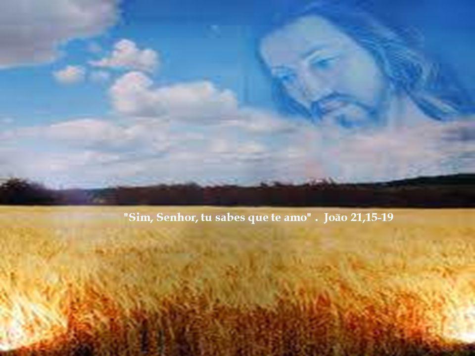 Sim, Senhor, tu sabes que te amo . João 21,15-19