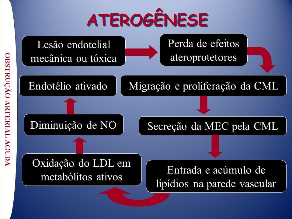 ATEROGÊNESE OBSTRUÇÃO ARTERIAL AGUDA Lesão endotelial mecânica ou tóxica Migração e proliferação da CML Entrada e acúmulo de lipídios na parede vascular Secreção da MEC pela CML Diminuição de NO Perda de efeitos ateroprotetores Oxidação do LDL em metabólitos ativos Endotélio ativado