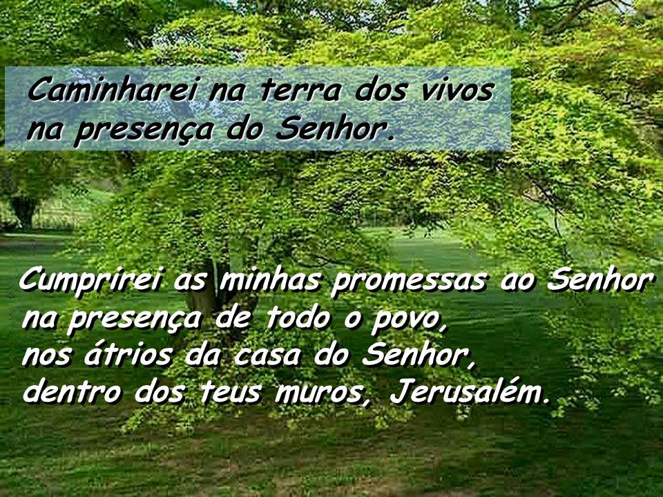 Caminharei na terra dos vivos Caminharei na terra dos vivos na presença do Senhor.