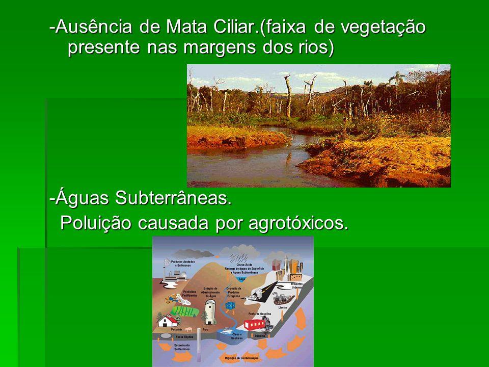 -Ausência de Mata Ciliar.(faixa de vegetação presente nas margens dos rios) -Águas Subterrâneas. Poluição causada por agrotóxicos. Poluição causada po