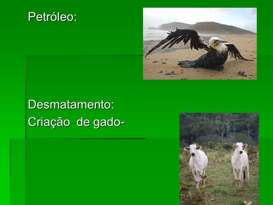Petróleo:Desmatamento: Criação de gado-