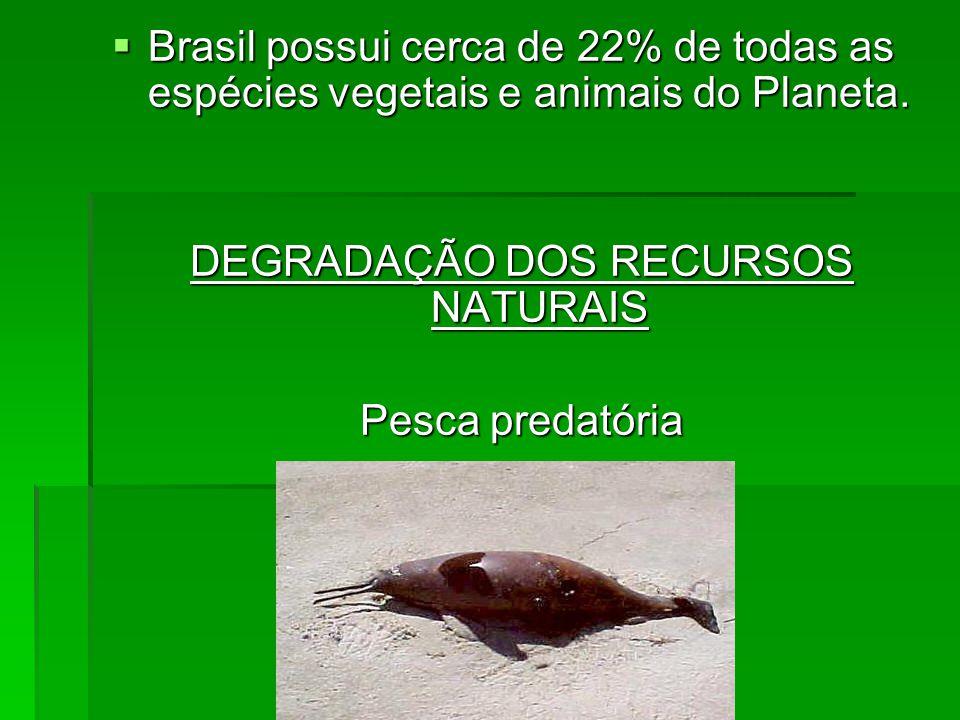 Brasil possui cerca de 22% de todas as espécies vegetais e animais do Planeta. Brasil possui cerca de 22% de todas as espécies vegetais e animais do P
