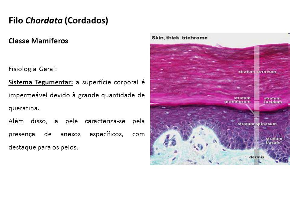 Classe Mamíferos Fisiologia Geral: Sistema Tegumentar: a superfície corporal é impermeável devido à grande quantidade de queratina. Além disso, a pele