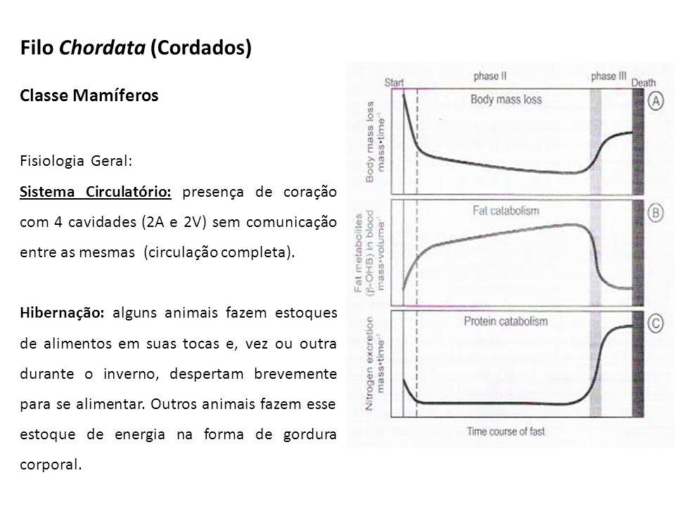Classe Mamíferos Fisiologia Geral: Sistema Circulatório: presença de coração com 4 cavidades (2A e 2V) sem comunicação entre as mesmas (circulação com