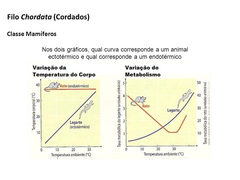 Nos dois gráficos, qual curva corresponde a um animal ectotérmico e qual corresponde a um endotérmico Filo Chordata (Cordados) Classe Mamíferos