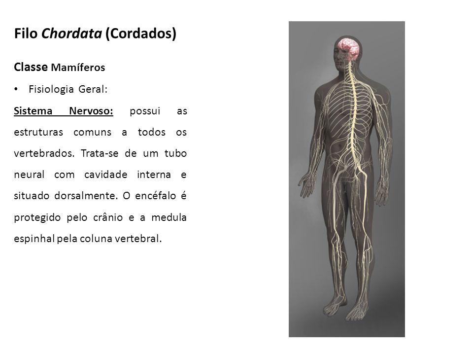 Classe Mamíferos Fisiologia Geral: Sistema Nervoso: possui as estruturas comuns a todos os vertebrados. Trata-se de um tubo neural com cavidade intern