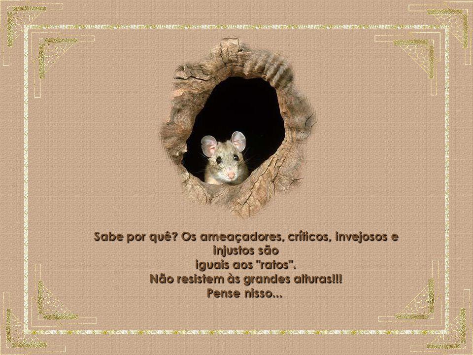 O Rato Sabe por quê.Os ameaçadores, críticos, invejosos e injustos são iguais aos ratos .