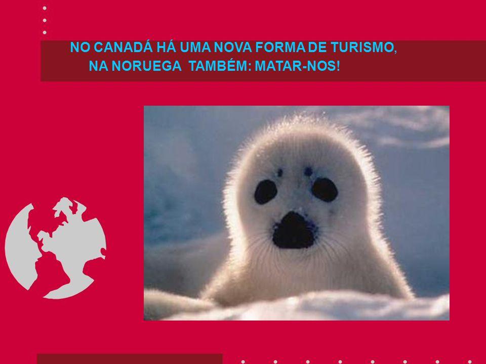 NO CANADÁ HÁ UMA NOVA FORMA DE TURISMO, NA NORUEGA TAMBÉM: MATAR-NOS!