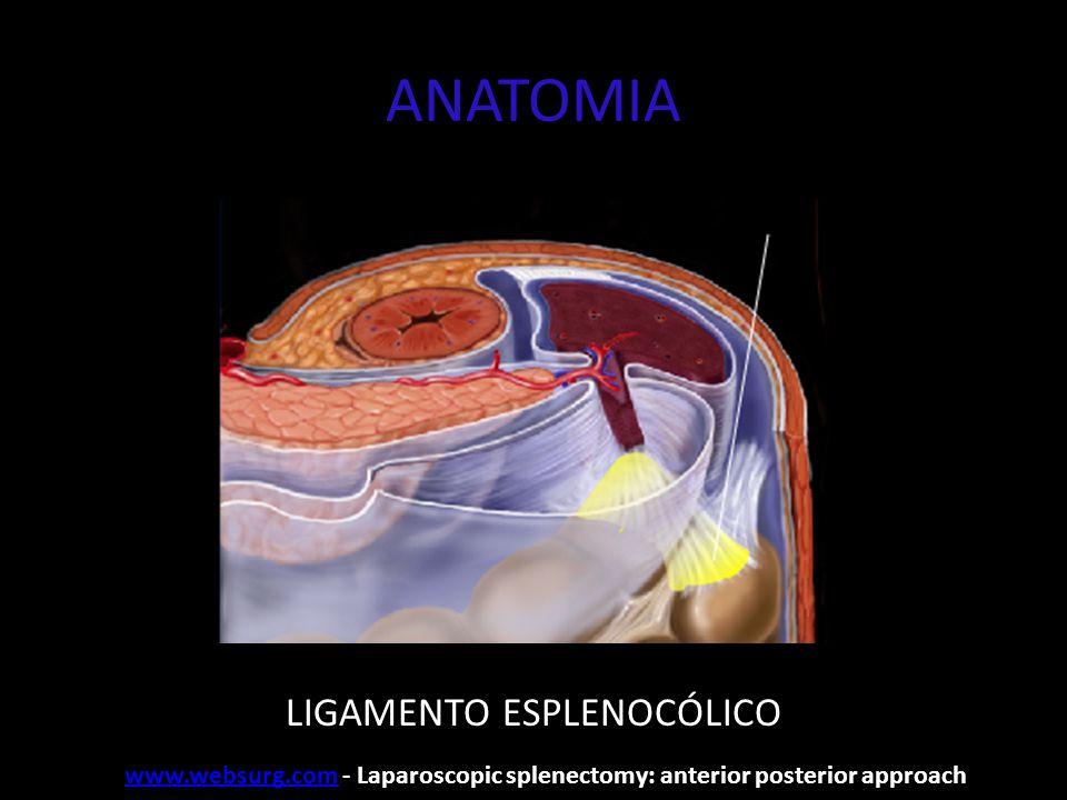 ANATOMIA LIGAMENTO ESPLENOCÓLICO www.websurg.comwww.websurg.com - Laparoscopic splenectomy: anterior posterior approach