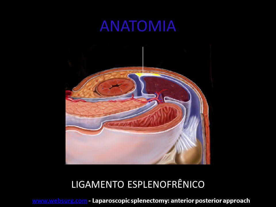 Portais e pneumoperitôneo Pneumoperitôneo: - agulha de Verres - Ponto médio entre o rebordo costal E e a cicatriz umbilical www.websurg.comwww.websurg.com - Laparoscopic splenectomy: anterior posterior approach