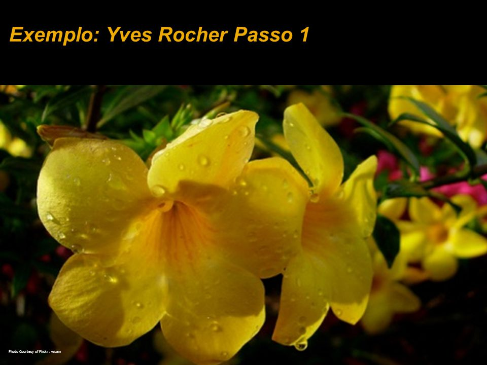 Exemplo: Yves Rocher Passo 1 Photo Courtesy of Flickr : wizan