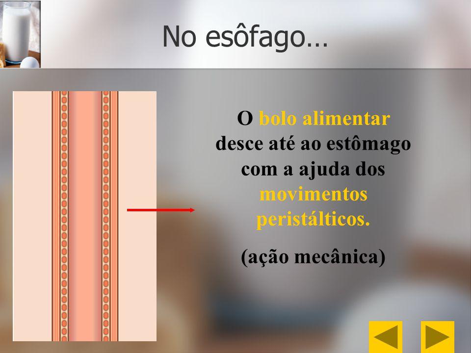 No esôfago… O bolo alimentar desce até ao estômago com a ajuda dos movimentos peristálticos. (ação mecânica)