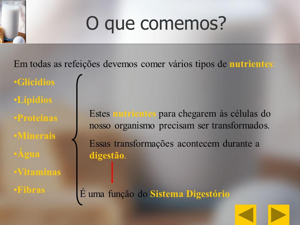 Movimentos peristálticos efetuados pelo intestino grosso até à expulsão das fezes.