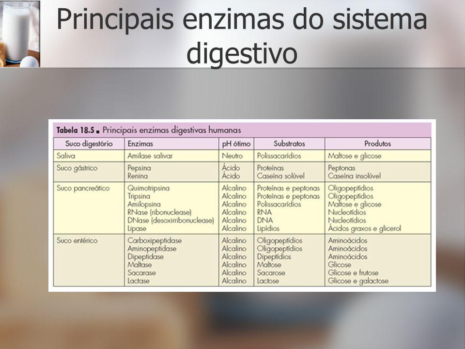 Principais enzimas do sistema digestivo