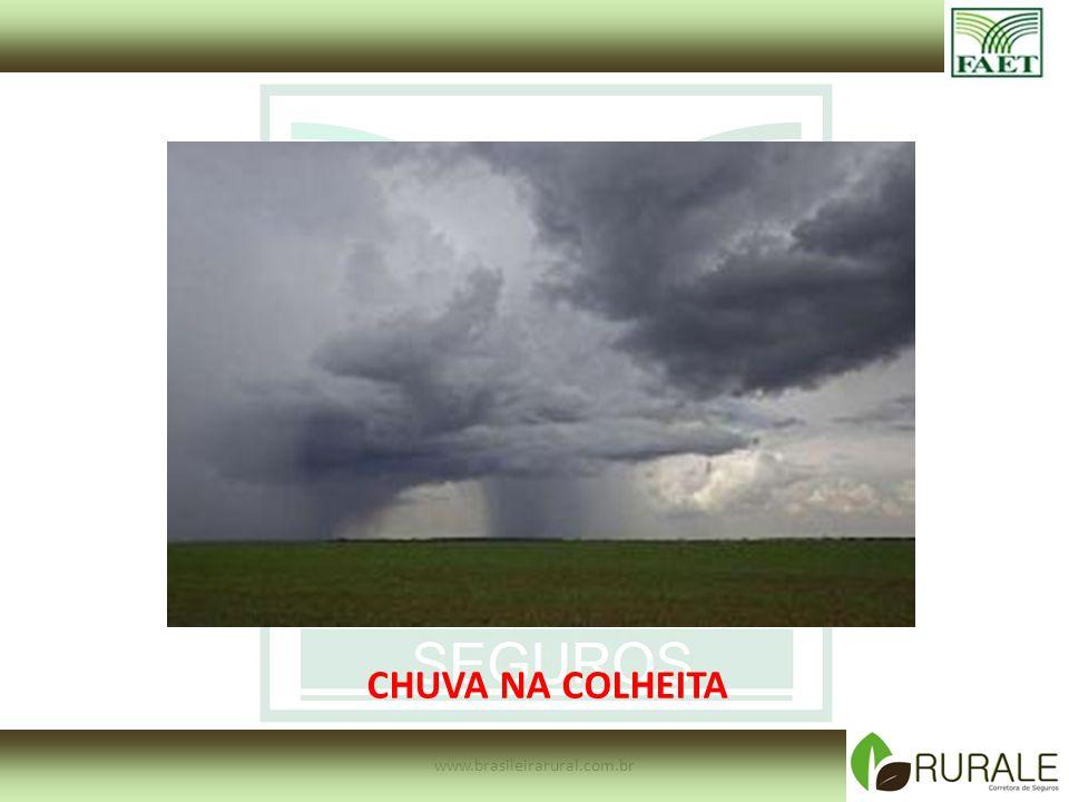 www.brasileirarural.com.br CHUVA NA COLHEITA
