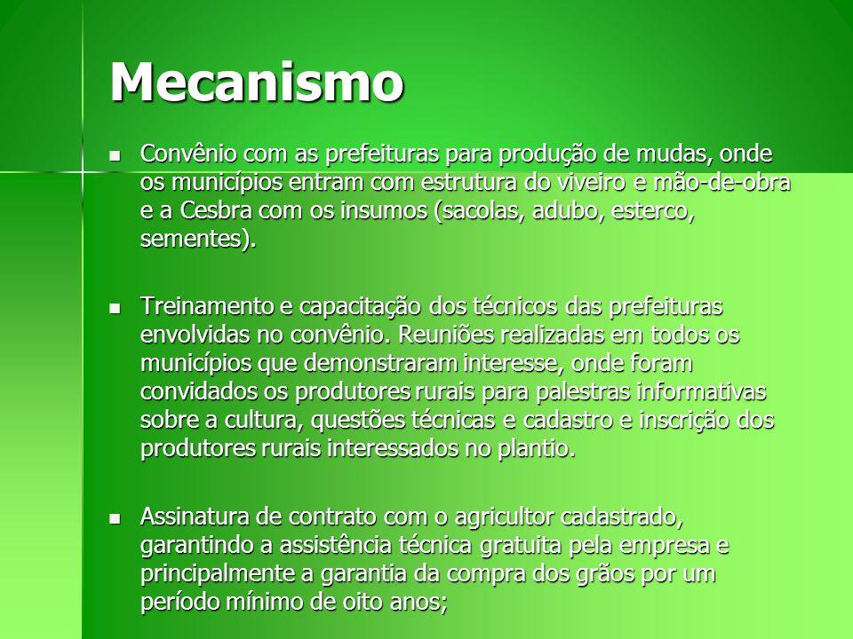Mecanismo Convênio com as prefeituras para produção de mudas, onde os municípios entram com estrutura do viveiro e mão-de-obra e a Cesbra com os insum