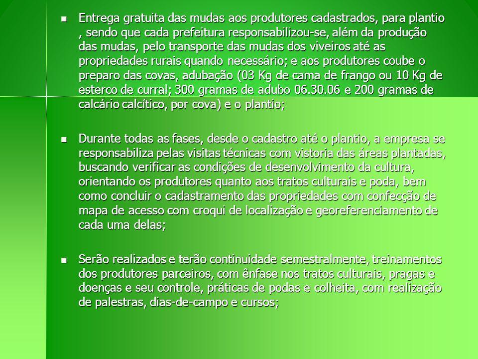 Entrega gratuita das mudas aos produtores cadastrados, para plantio, sendo que cada prefeitura responsabilizou-se, além da produção das mudas, pelo tr