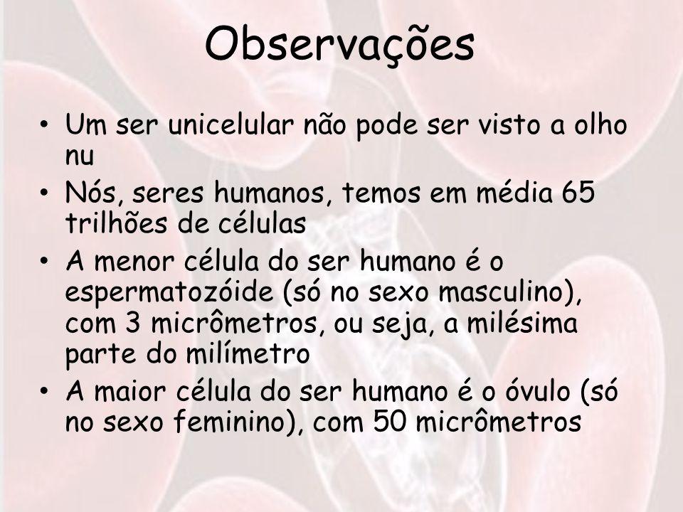 Observações Um ser unicelular não pode ser visto a olho nu Nós, seres humanos, temos em média 65 trilhões de células A menor célula do ser humano é o