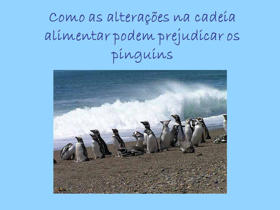Como as alterações na cadeia alimentar podem prejudicar os pinguins