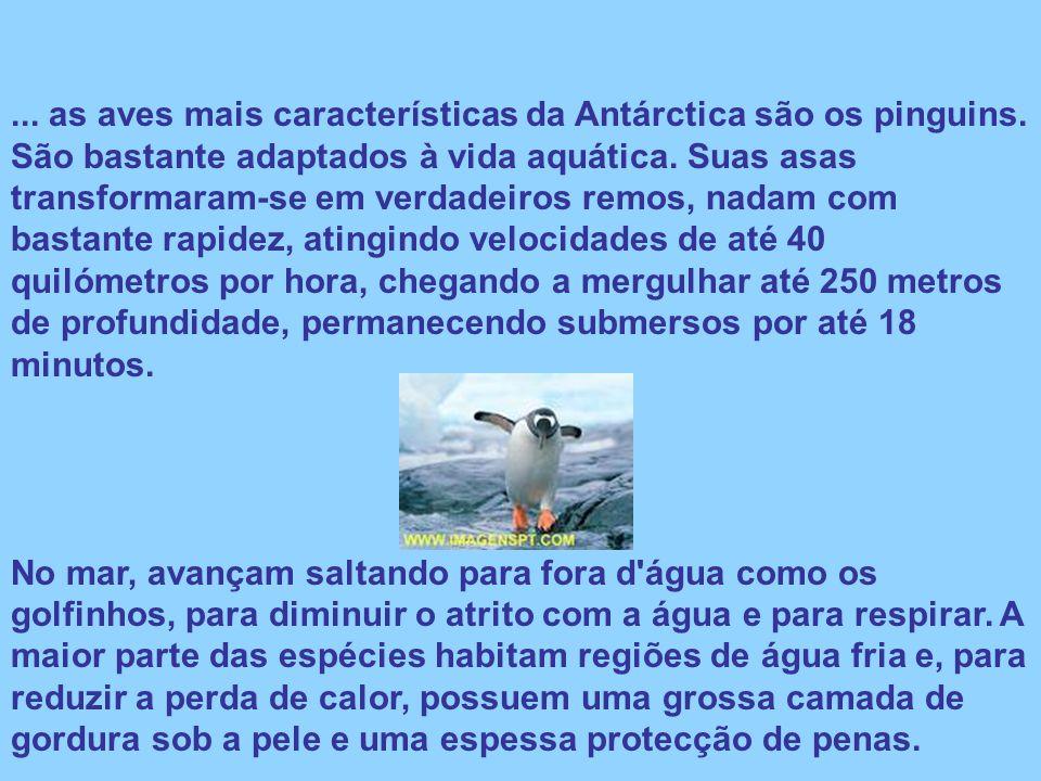 ... as aves mais características da Antárctica são os pinguins. São bastante adaptados à vida aquática. Suas asas transformaram-se em verdadeiros remo