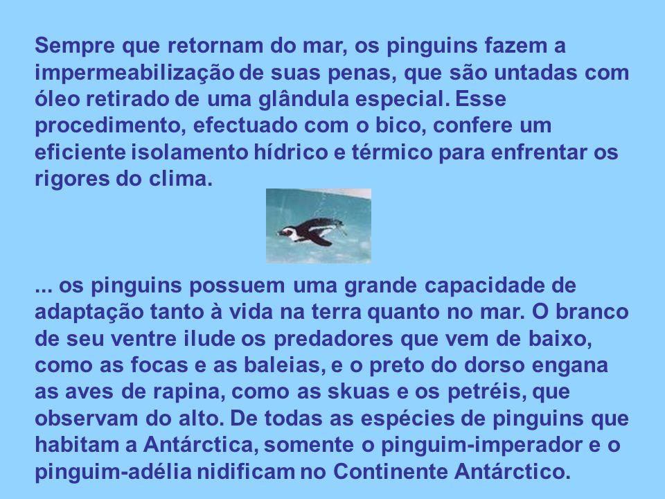 Sempre que retornam do mar, os pinguins fazem a impermeabilização de suas penas, que são untadas com óleo retirado de uma glândula especial. Esse proc